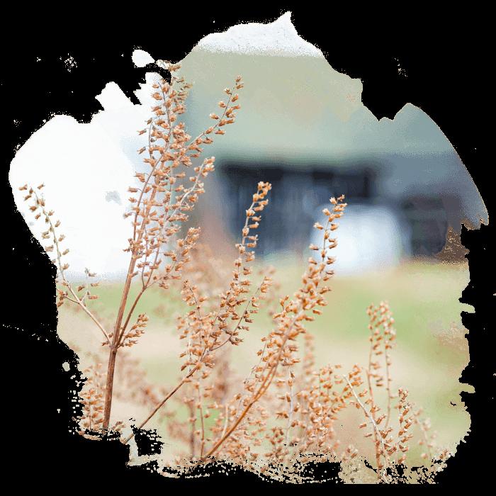 ef-conservation-image